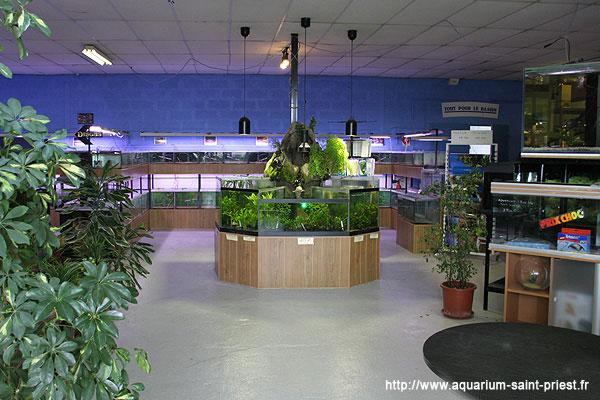 l 39 aquarium de steph saint priest galerie photo magasin. Black Bedroom Furniture Sets. Home Design Ideas