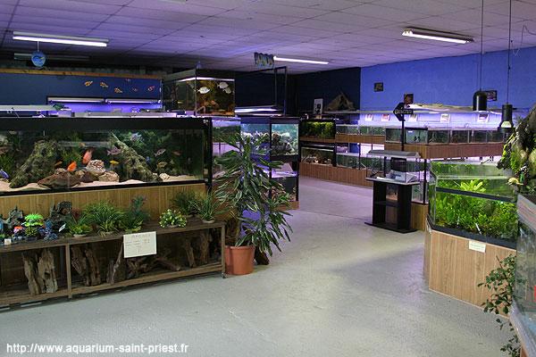 L 39 aquarium de steph saint priest galerie photo magasin for Site aquariophilie